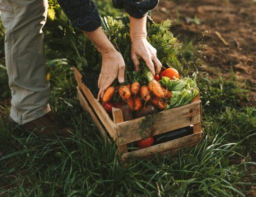 aposentadoria híbrida - trabalhador colocando cenouras em uma caixa de madeira